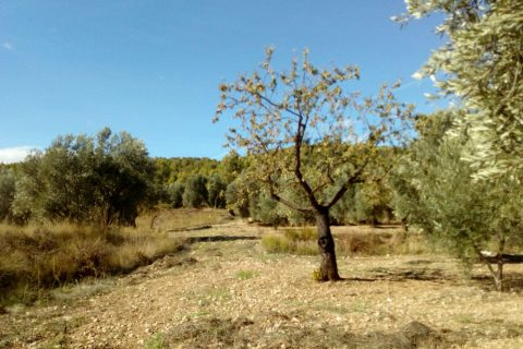 4 slaapkamers Finca te koop in La Portellada